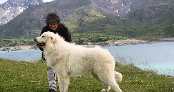 1° Ottobre '17, Castello Malaspina Dog Show